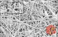 تولید نانو کامپوزیتی ضد میکروبی برای صنایع غذایی و ترمیم سوختگی