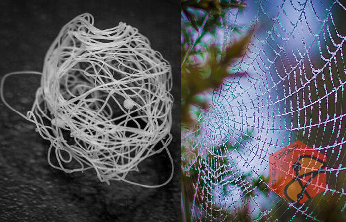 تولید تار عنکبوت مصنوعی