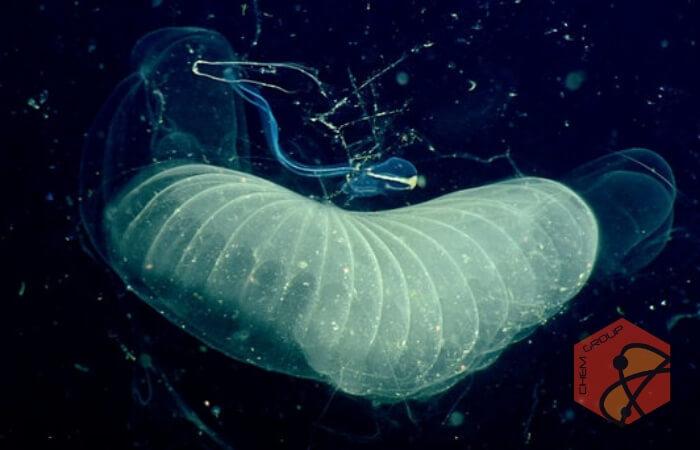 کشف کرم آبی که دی اکسید کربن میخورد