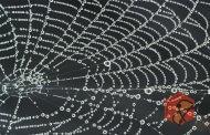 تولید تار عنکبوت مصنوعی از ماده ای که 98 درصد آن آب است